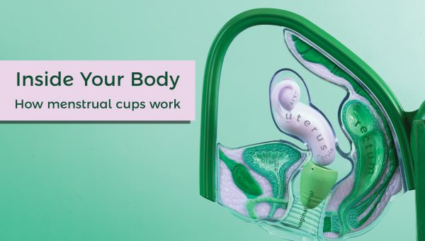 How a menstrual cup works inside your body